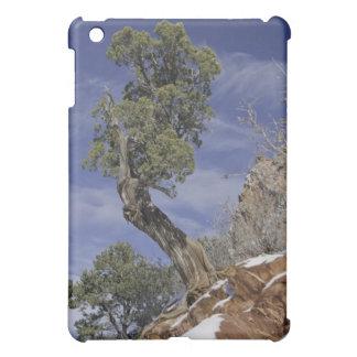 Bristlecone Pine 2 Case For The iPad Mini