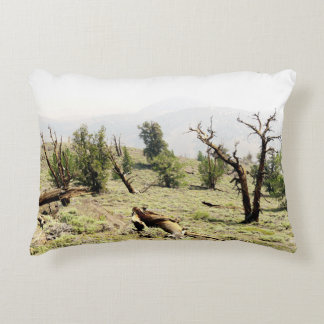 Bristlecone Pine Accent Pillow
