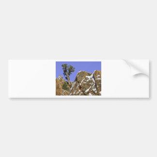 Bristlecone Pine Bumper Sticker
