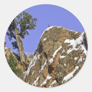 Bristlecone Pine Classic Round Sticker