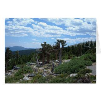 Bristlecone Pine Tree Card