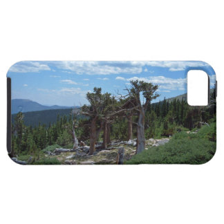 Bristlecone Pine Tree iPhone 5 Cover