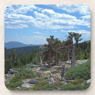Bristlecone Pine Tree Coaster