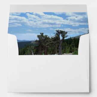 Bristlecone Pine Tree Envelope