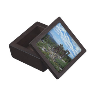 Bristlecone Pine Tree Gift Box