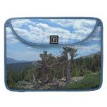 Bristlecone Pine Tree, Mount Evans, Colorado MacBook Pro Sleeves
