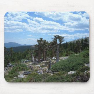 Bristlecone Pine Tree Mouse Pad