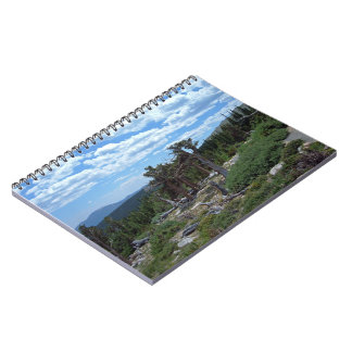 Bristlecone Pine Tree Note Book