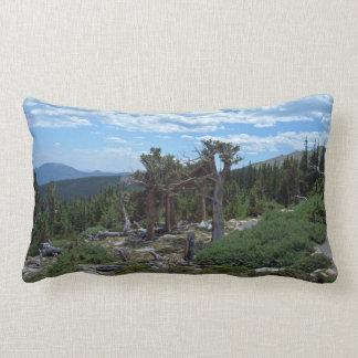 Bristlecone Pine Tree Pillow