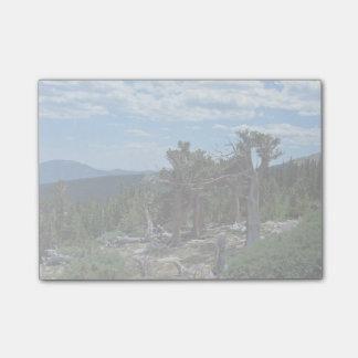 Bristlecone Pine Tree Post-it Notes