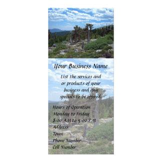 Bristlecone Pine Tree Rack Card