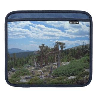 Bristlecone Pine Tree Sleeve For iPads