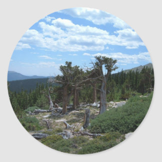 Bristlecone Pine Tree Classic Round Sticker