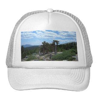 Bristlecone Pine Tree Trucker Hat