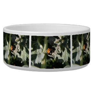 British 7 Spot Ladybug Dog Bowl