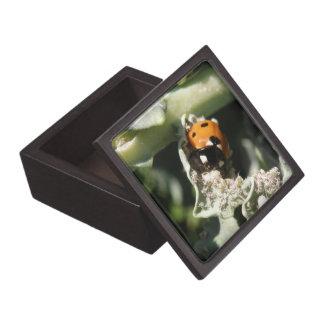 British 7 Spot Ladybug Premium Gift Box