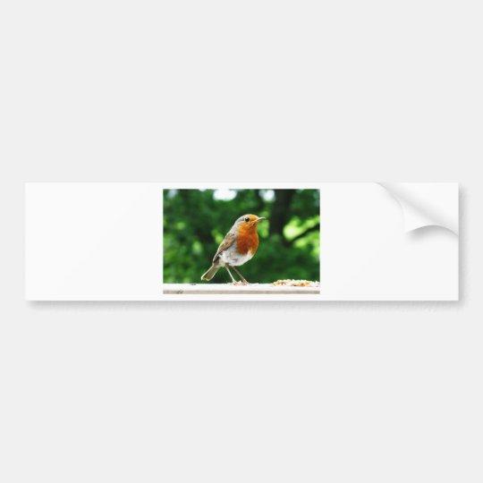 British birds, Robin , wildlife nature photography Bumper Sticker