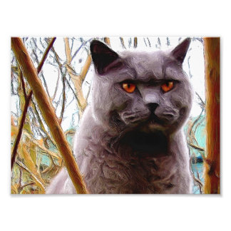 British blue shorthaired cat photograph