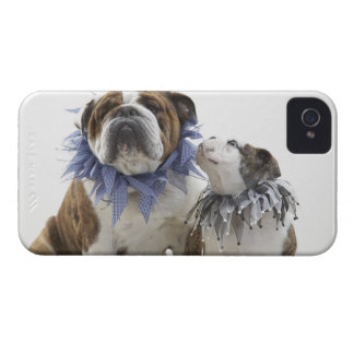 British bulldog and puppy wearing jester collar, iPhone 4 cover