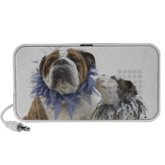 British bulldog and puppy wearing jester collar, travel speakers