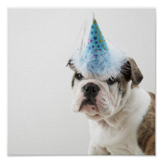 British Bulldog Puppy Wearing A Party Hat Poster