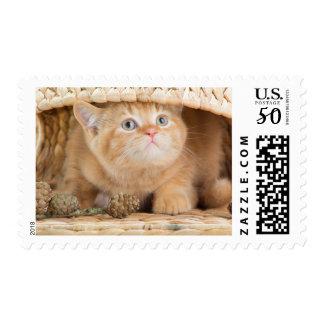 British Kitten Looking Out From Under A Basket Postage