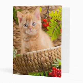 British Kitten Sitting In A Basket With Mountain Mini Binder