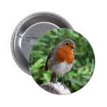 British Robin Pinback Buttons