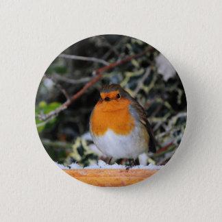British robin redbreast pinback button