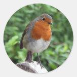British Robin Round Sticker