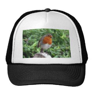 British Robin Trucker Hat
