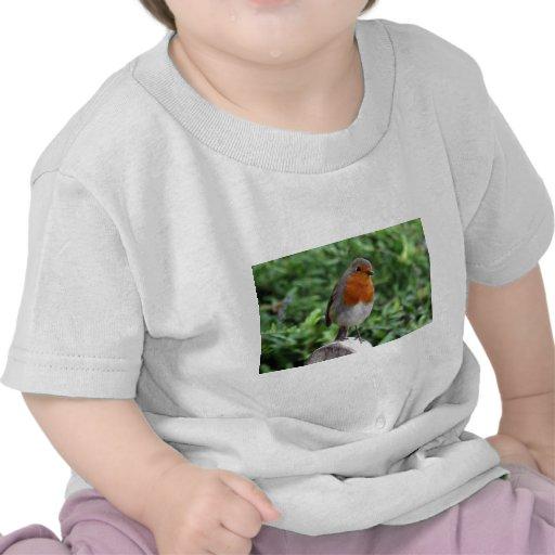 British Robin T-shirt