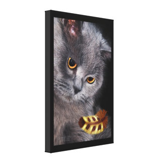 British Short-Hair Cat with Feather Canvas Print