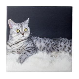 British short hair silver tabby cat lying on fur ceramic tile