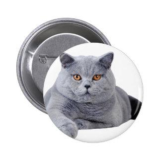 British shorthair cat 2 inch round button