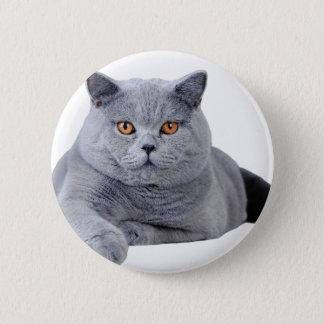 British shorthair cat button