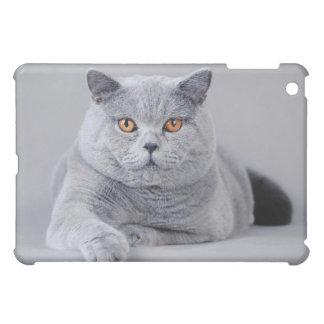 British shorthair cat cover for the iPad mini