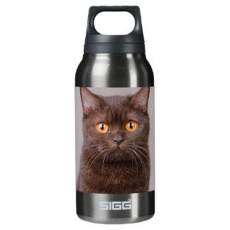 British shorthair cat insulated water bottle