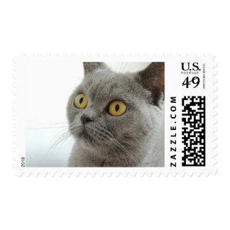 British Shorthair Cat Looking Startled Stamp
