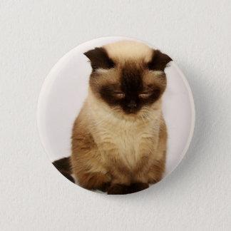British Shorthair Cat Pet Mieze British Short Hair Button