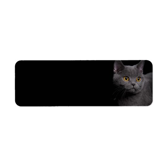 British Shorthair Cat Return Address Label