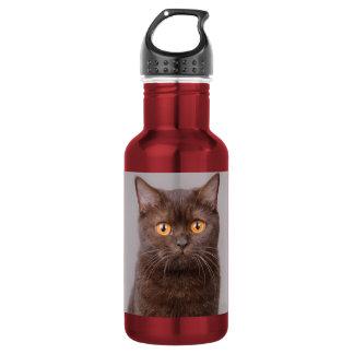 British shorthair cat stainless steel water bottle