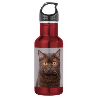 British shorthair cat water bottle