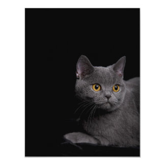 British Shorthair Invitation