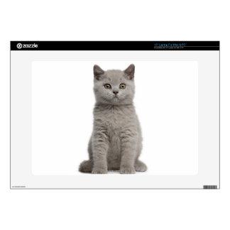 British Shorthair Kitten (10 weeks old) 2 Laptop Decal