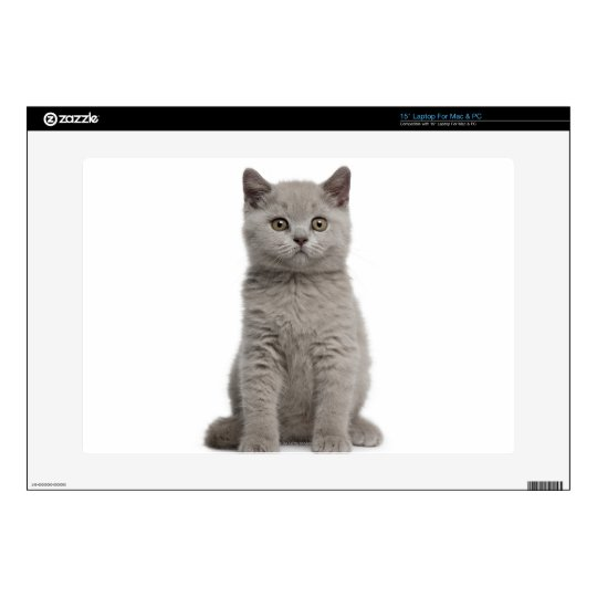 British Shorthair Kitten (10 weeks old) 2 Laptop Decal
