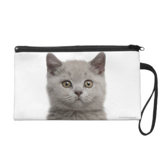 British Shorthair Kitten (10 weeks old) 2 Wristlet Purse