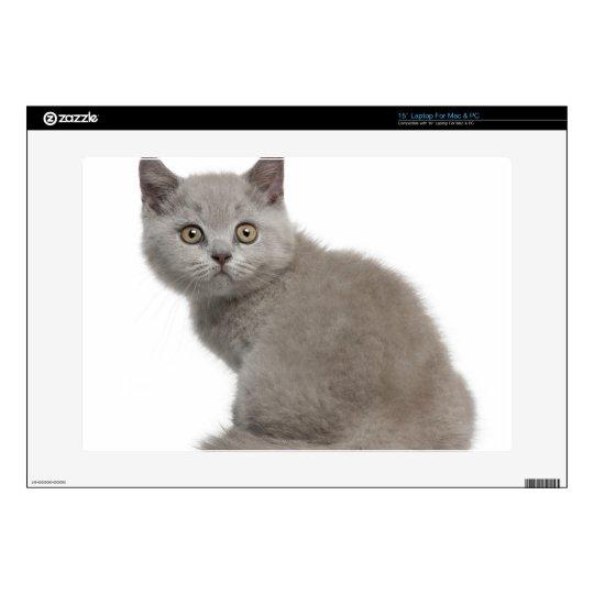 British Shorthair Kitten (10 weeks old) Laptop Decal