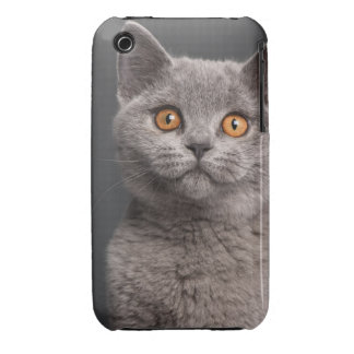 British Shorthair kitten (3 months old) Case-Mate iPhone 3 Case