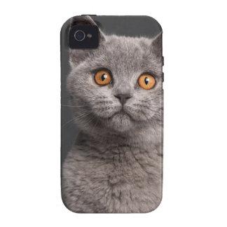 British Shorthair kitten (3 months old) iPhone 4/4S Cases